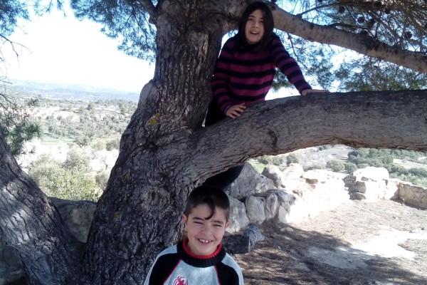 arbre tossal